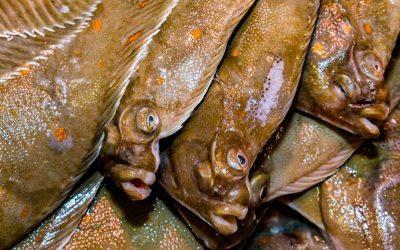 Zeeslag: het debat over pulsvisserij