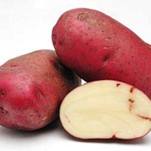 Aardappel_Rode eersteling_ArkvandeSmaak
