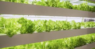 13 Juni Low & High tech food lab bij The New Farm