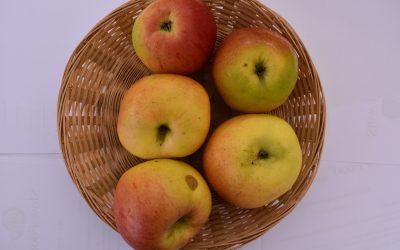 Notarisappel opnieuw lekkerste appel van Nederland