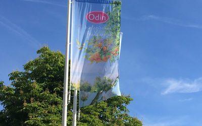 Slow Food Utrecht professionals op bezoek bij Odin