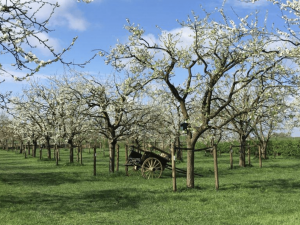 Lopen in Lent Slow Food Rijnzoet