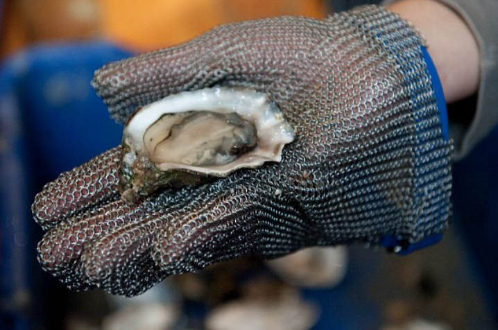 Ontdek de Ark van de Smaak: Zeeuwse platte oester