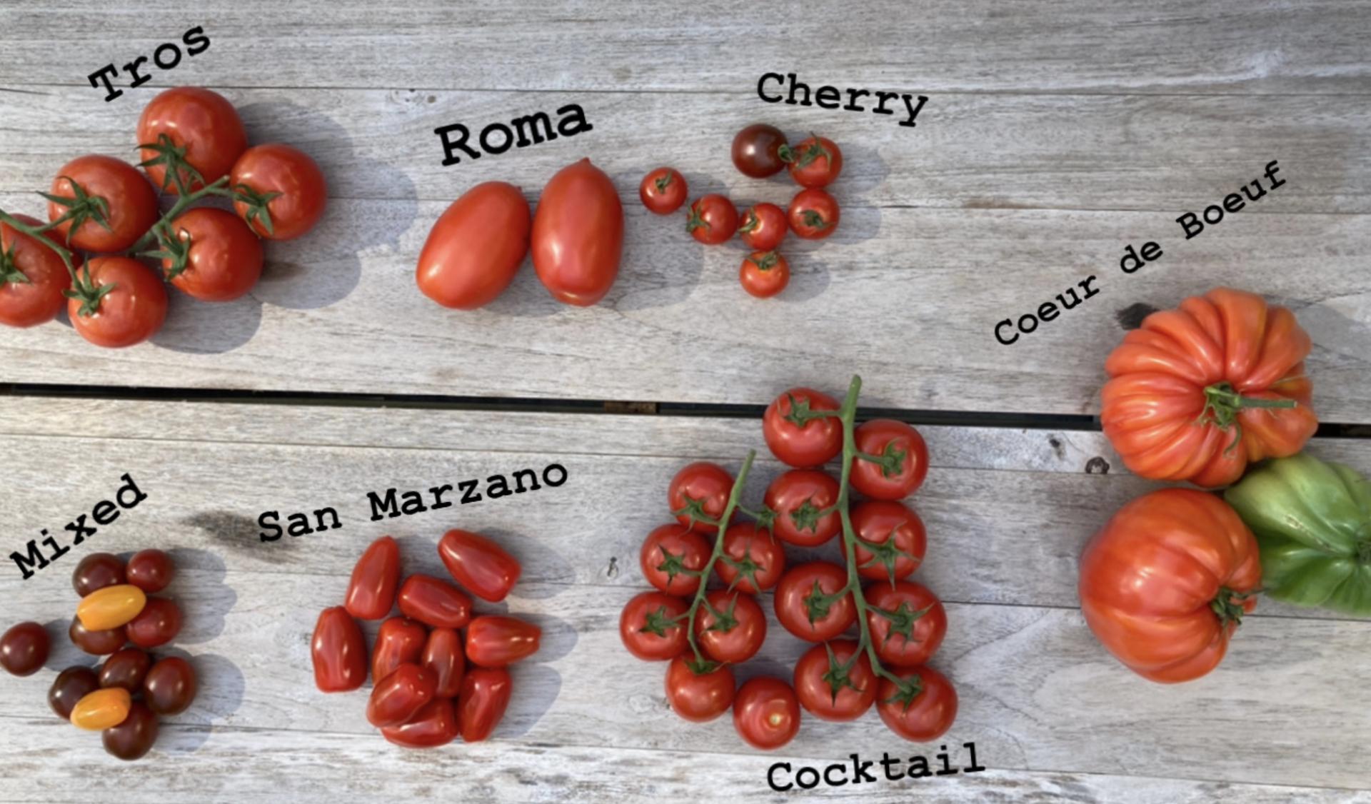 Nazomers Tomatenfestival_Slow Food Brabant