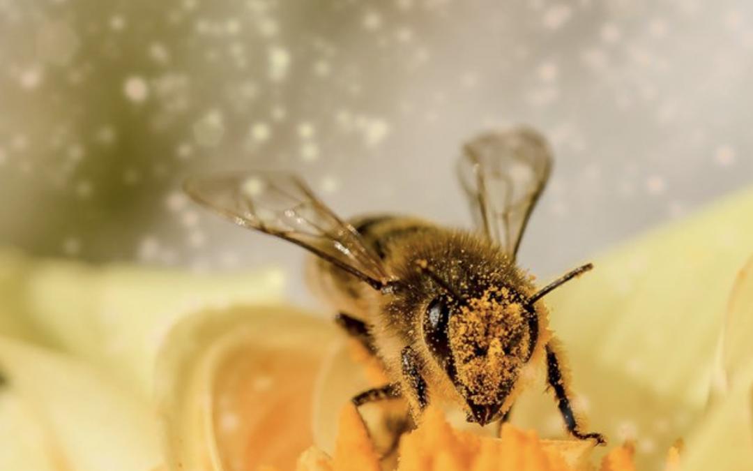 Europees Burgerinitiatief 'Red de bijen en de boeren!'